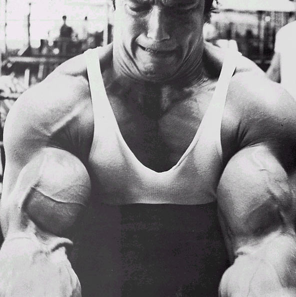 arnold 1 The Mind Muscle Connection