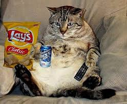 Cat couch potato