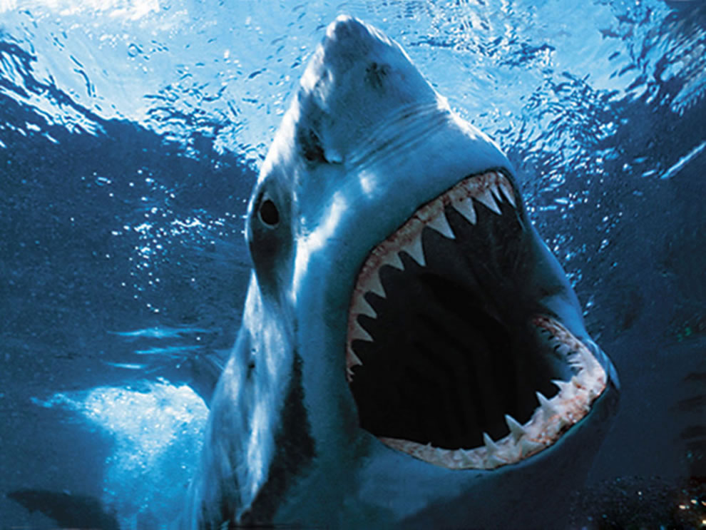 Shark habits will make your brain clutter free